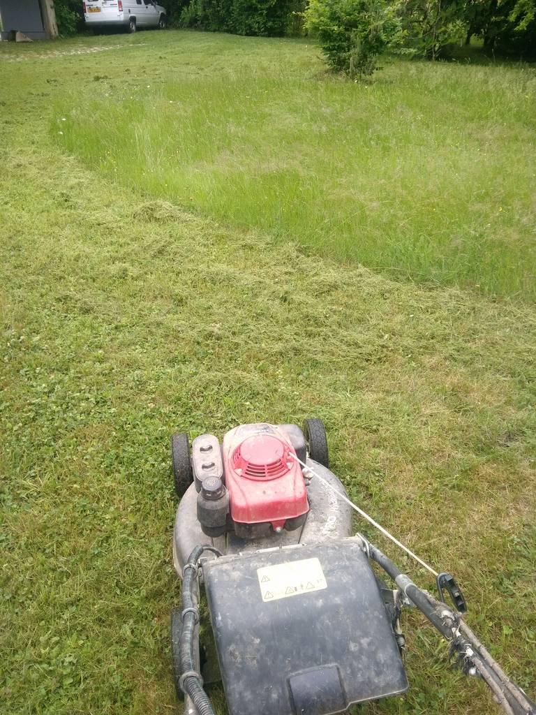 Tonte de pelouse et gazon, entretien jardin