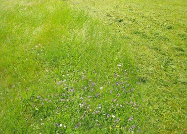 Gestion différenciée d'un espace vert, Savoie