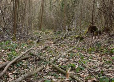 Réouverture d'un cloisonnement sylvicole permanent à Saint-Genix-les-Villages